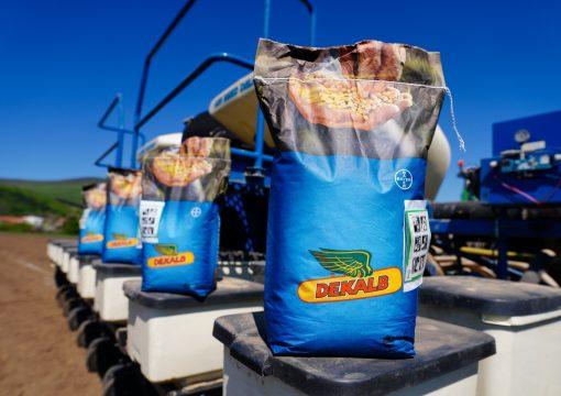 Sejba pokusných odrôd kukuríc značky DEKALB® spoločnosti Bayer